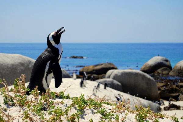 lal-cpt-leisure-cape-point-day-2-10